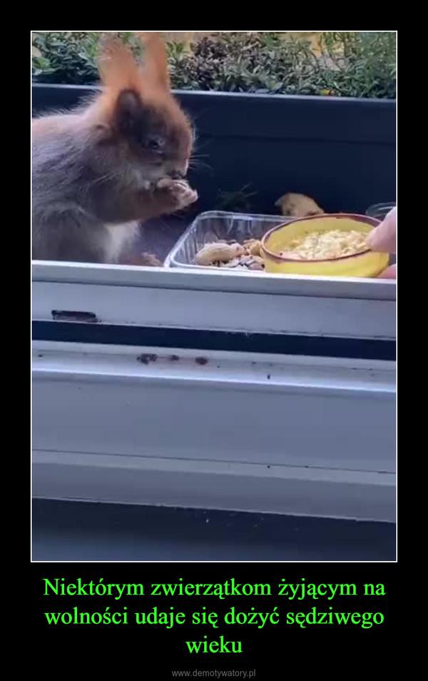 Niektórym zwierzątkom żyjącym na wolności udaje się dożyć sędziwego wieku –
