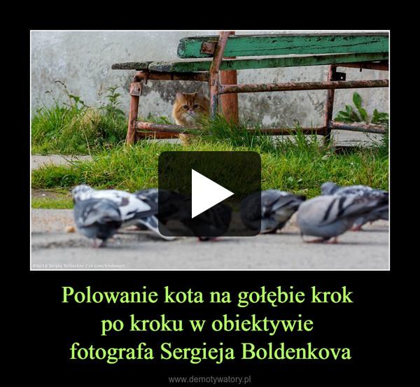Polowanie kota na gołębie krok po kroku w obiektywie fotografa Sergieja Boldenkova –