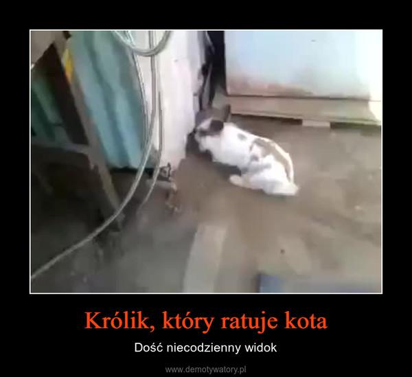 Królik, który ratuje kota – Dość niecodzienny widok