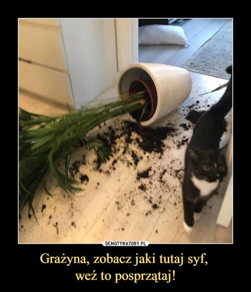 Grażyna, zobacz jaki tutaj syf,  weź to posprzątaj!