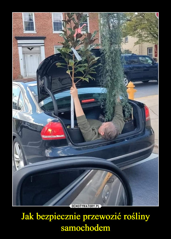 Jak bezpiecznie przewozić rośliny samochodem –