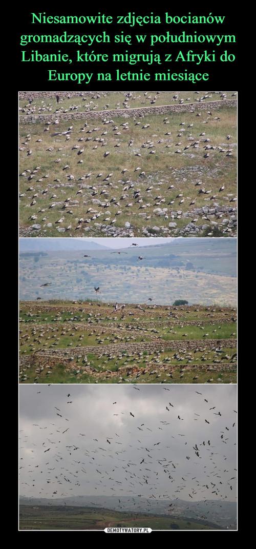 Niesamowite zdjęcia bocianów gromadzących się w południowym Libanie, które migrują z Afryki do Europy na letnie miesiące