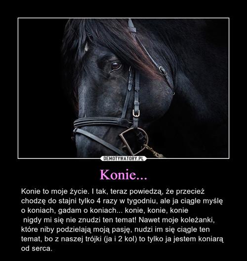 Konie...