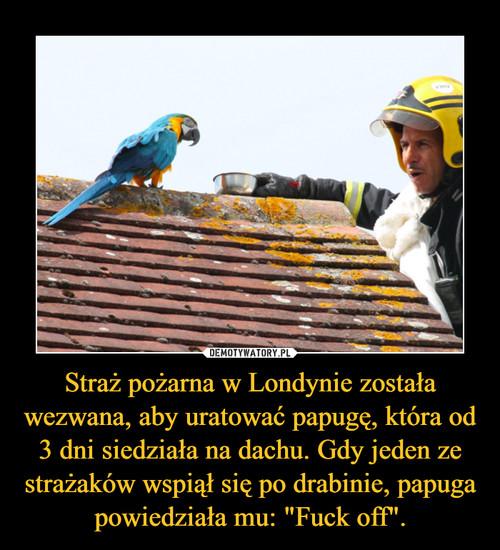 """Straż pożarna w Londynie została wezwana, aby uratować papugę, która od 3 dni siedziała na dachu. Gdy jeden ze strażaków wspiął się po drabinie, papuga powiedziała mu: """"Fuck off""""."""