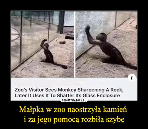 Małpka w zoo naostrzyła kamień  i za jego pomocą rozbiła szybę
