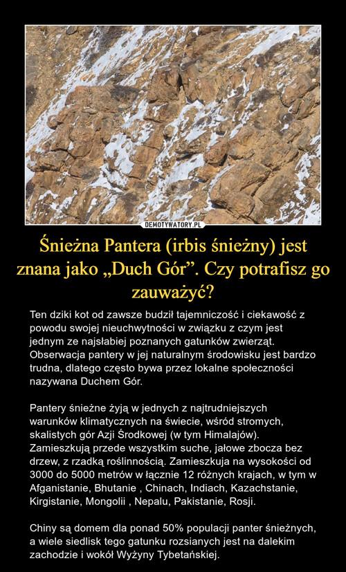 """Śnieżna Pantera (irbis śnieżny) jest znana jako """"Duch Gór"""". Czy potrafisz go zauważyć?"""