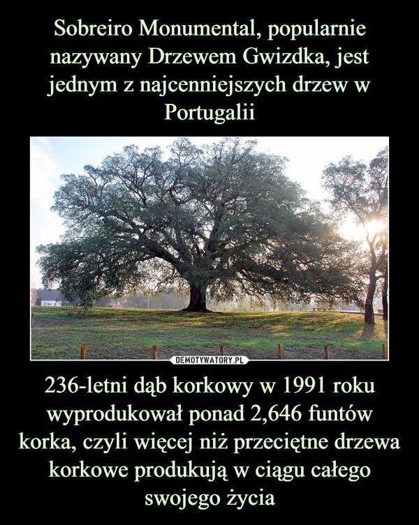 236-letni dąb korkowy w 1991 roku wyprodukował ponad 2,646 funtów korka, czyli więcej niż przeciętne drzewa korkowe produkują w ciągu całego swojego życia –