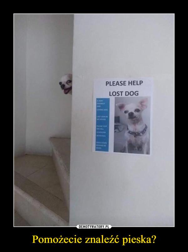 Pomożecie znaleźć pieska? –  please help lost dog